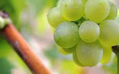 Vinho Branco da Flavours For You entre os melhores de Portugal