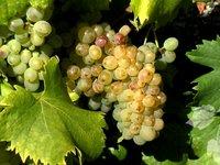 PBG Wines